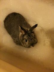 Bubble Bath !