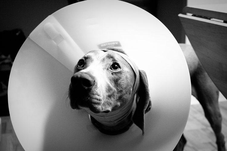Pupper Dog