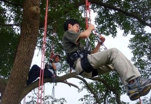 treeclimbing-01