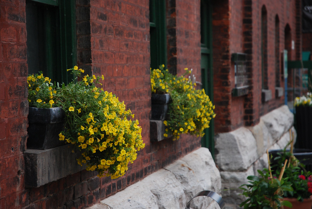 Yellow flowers in the Distillery district