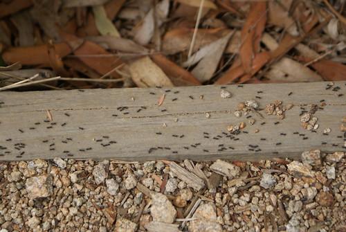 Ant Traffic