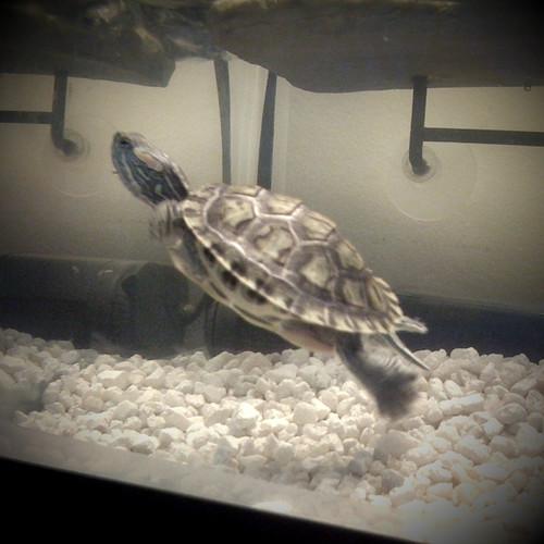 MMX 161 Turtle