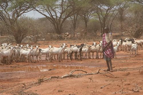 Northeastern Kenya 7