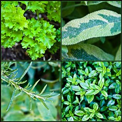 ♪ Parsley, Sage, Rosemary and Thyme  ♪