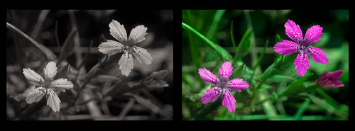 Two pink flower over green grass