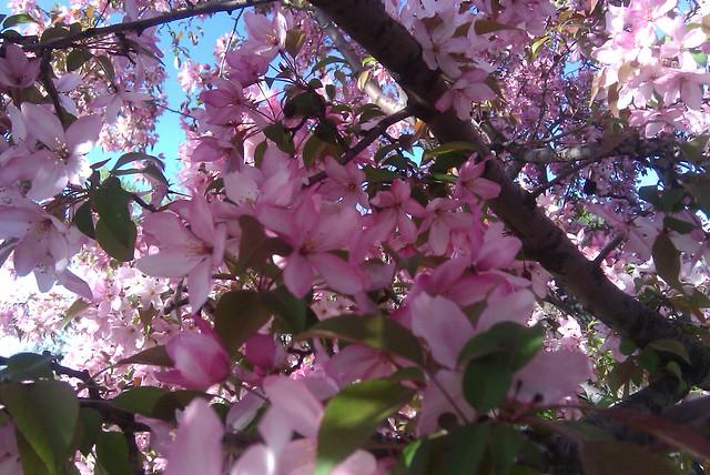 111/365 - Spring - 4/21/2010