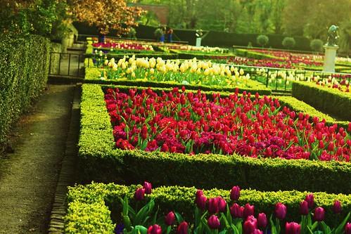 Flower Gardens 1