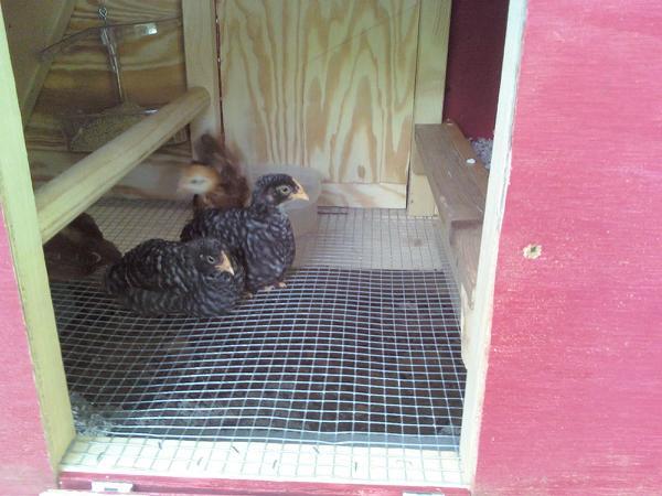 Hey ladies... you chicks live around here?