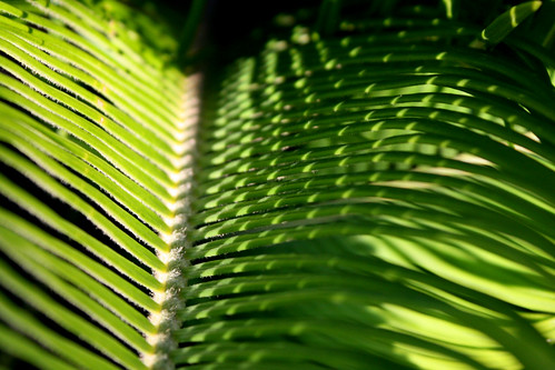 Cycad: Shadow Angles