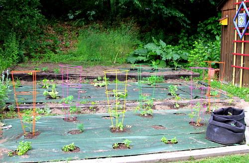 Veggie Garden Planted