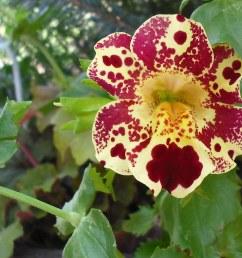 flower cropped piratetinkerbell tags california ranch ca west flower picnic fuji disneyland [ 1024 x 786 Pixel ]
