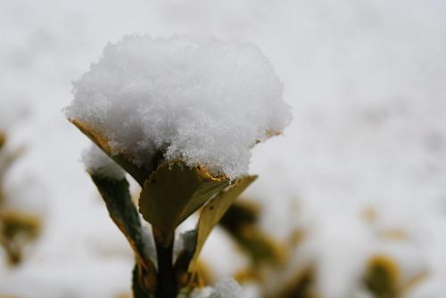 [43/365] Snow Cone