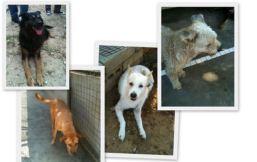 Noahs Ark Dogs2