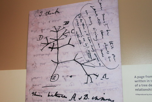 Smithsonian - Evolution of Evolution - Darwin's Tree of Life From Journal