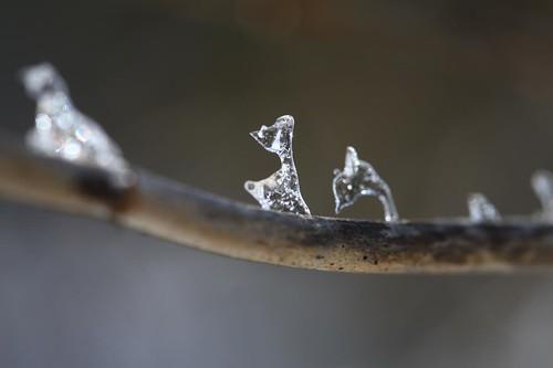 Dear & Dolphin, or Dog & Elephant HummingBird -- http://www.flickr.com/photos/lexnger/4371990422/