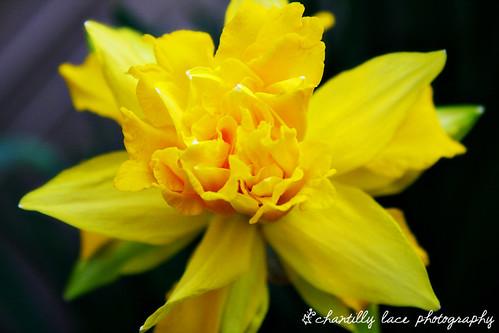 92/365: Yellow