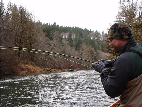 Fighting an Alsea River Winter Steelhead