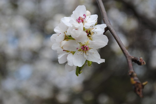[74/365] Spring is Springing