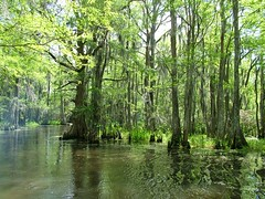 Louisiana's wetlands... home to a mythical monster?
