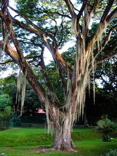 old tree?