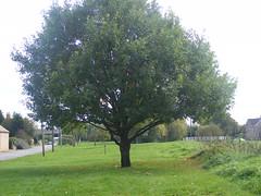 Nature walk 036
