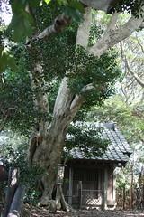 峯市民の森巡り(At Mine civic forest, Japan)
