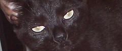 gigi eyes