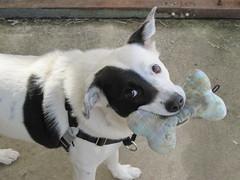 play? play!
