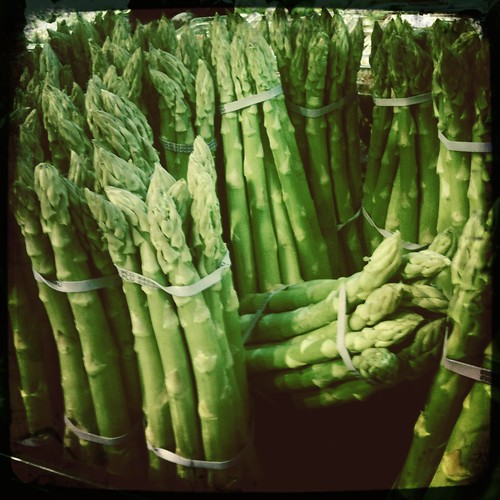 Forest Of Asparagus
