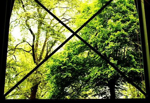X Marks the Park