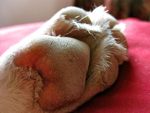 Bowpi's foot