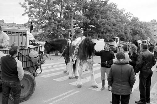 huge-horses-spain