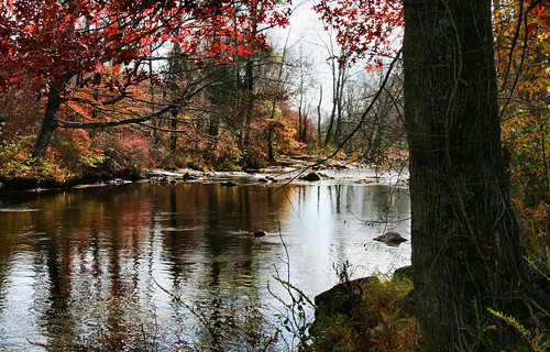 Fall on Piney