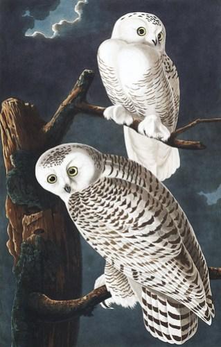 owl print Bryn Alexander