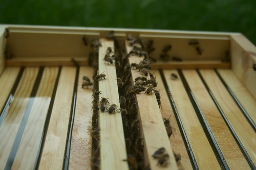 Top Hive Feeder