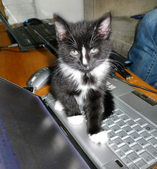 I iz on yr kbrdz surfing da interwebz 4 fishez