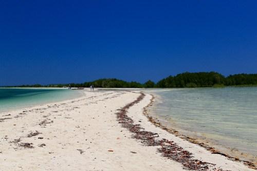 Slithering Snake Island