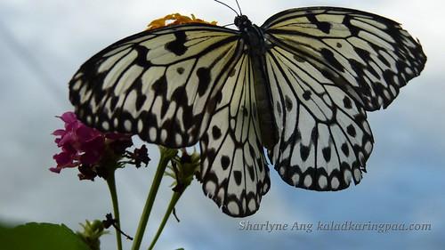 Butterfly Farm in Puerto Princesa 2