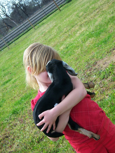 How do you talk to a little baby goat