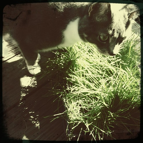 Cat on a Hot Spring Lawn