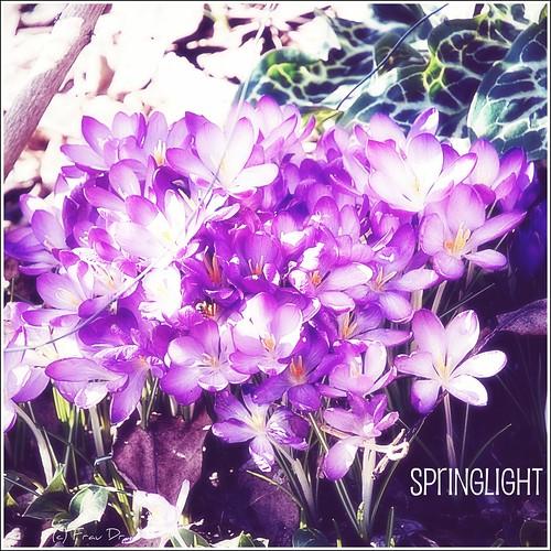 Wir locken den Frühling