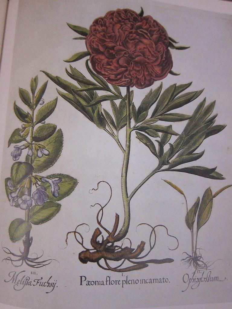 The Garden at Eichstaett (peony page)
