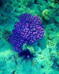 olympus_underwater012