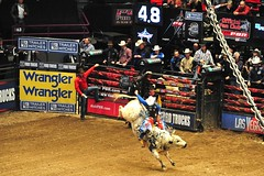 Professional Bull Riders    -  Madison Square ...