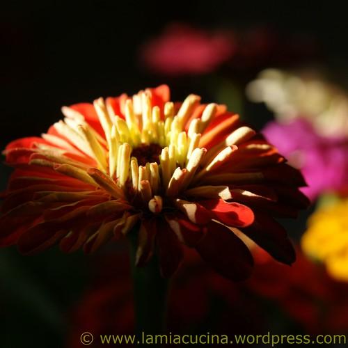 Ein Strauss Blumen für Päm