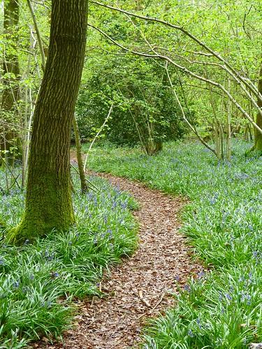 Bluebells Path