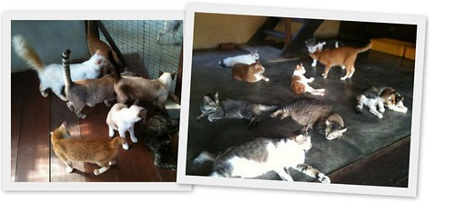 Noahs Ark Cats