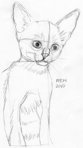 Cute kitten, drawn live on April 14, 2010