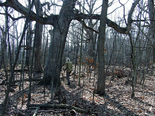 among the big oaks