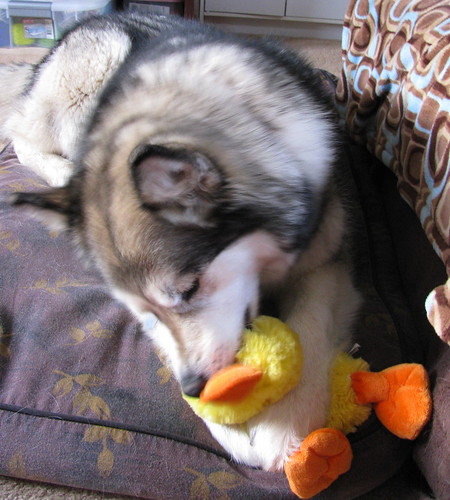 I like the stuffed duck